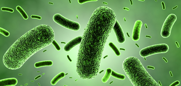 Good Bacteria Bad Bacteria What You Need To Know